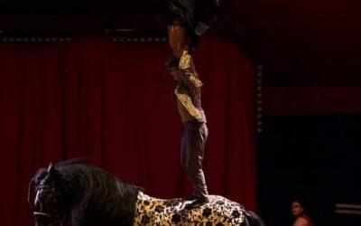 Cirque équestre au Pôle du Cheval et de l'Âne en Berry (18) - Bourges